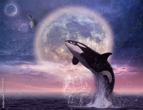 Fototapeta The whale in the sea
