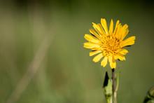Closeup View Of Blossom Of Mea...
