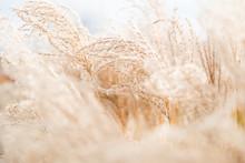 Dry Grass