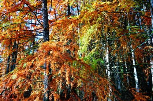 Fall colors © franck