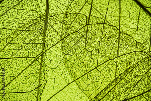 Aluminium Prints Macro photography green leaf texture - in detail