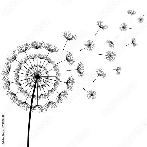 Black fluff dandelion on white background Canvas Print