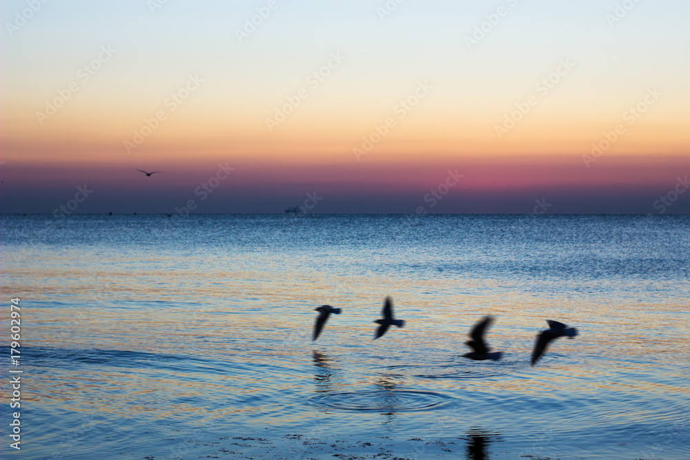 Autumn seascape at dawn. Flock of seagulls flying over blue sea. Silhouette of birds in flight. Beautiful morning colors