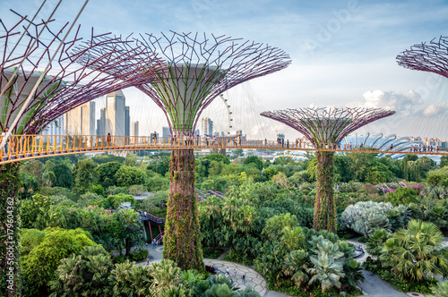 Photo  Jardins de Singapour