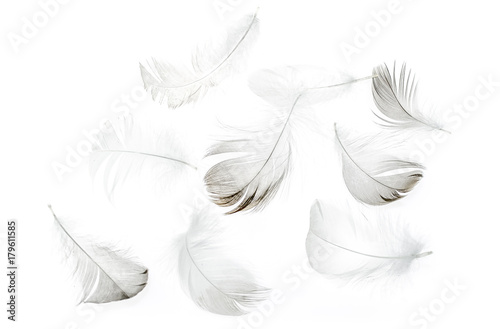 Feathers of birds on a white background as a background