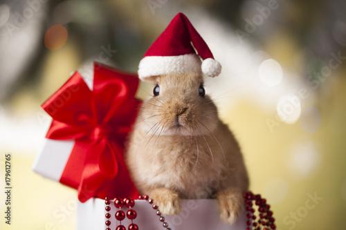 Holiday Christmas bunny in gift box
