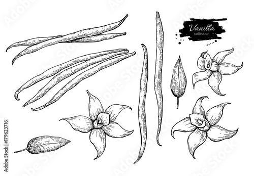 Pinturas sobre lienzo  Vanilla flower and bean stick vector drawing set