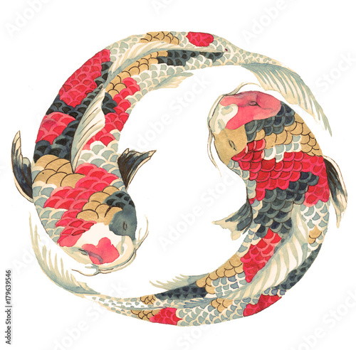 japanese-koi-on-white-background-illustration-of-the-avaricious-with-asian-carp-floating-in-a-circle