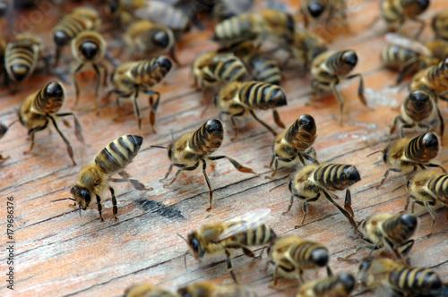 Viele Arbeitsbienen eines Bienenschwarms tanzen auf Holzunterlage