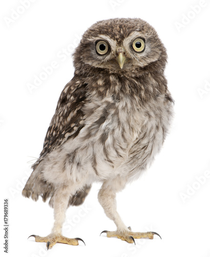 Fotobehang Uil Young owl standing in front of white background