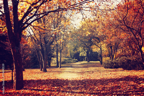 Cadres-photo bureau Marron Autumn nature landscape. Walkway in the forest in fall.