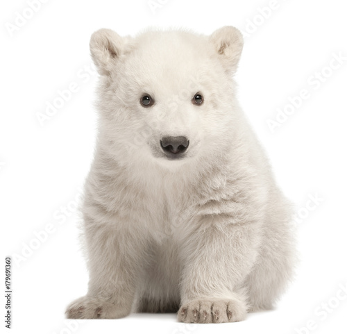 Deurstickers Ijsbeer Polar bear cub, Ursus maritimus, 3 months old, sitting against white background
