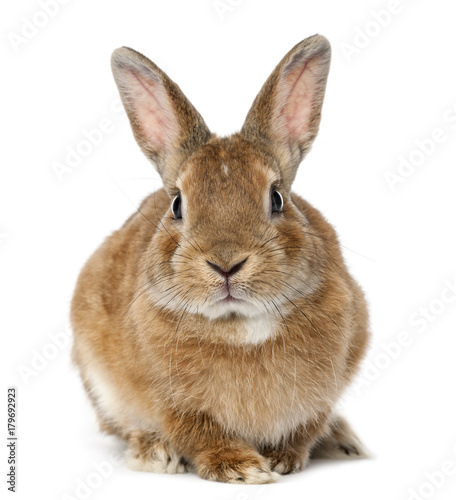 Rabbit lying against white background