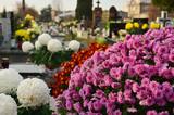 Fototapeta Kwiaty - Chryzantemy na cmentarzu, Wszystkich Świętych
