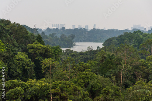 Photo  View of a dense tropical forest.