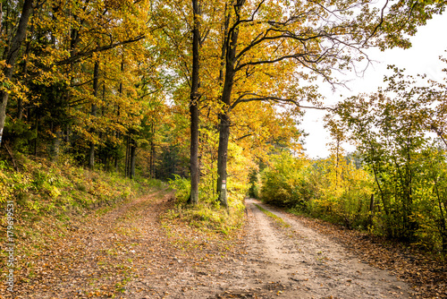Keuken foto achterwand Begraafplaats Golden forest in autumn, scenic landscape with path between autumnal vibrant colors of nature at fall