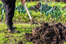 Gardener Working In The Vegetable Garden. Autumn Gardening, Organic Farming Concept.