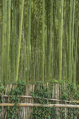 Foto op Canvas Bamboo Bamboo forest in Arashiyama,Kyoto, Japan
