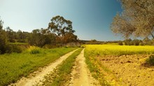A Girl In A Cowboy Hat And Jeans Walks Along A Dirt Road To The Camera Next To A Field Of Yellow Flowers And Eucalyptus Trees,