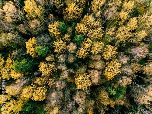 jesienny-las