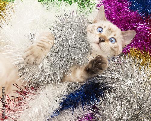 gattino bianco natalizio Fototapeta