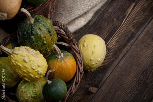 Fototapeta Dynia,  Halloween, jesień, różne kolory obraz
