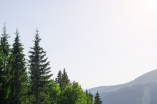A Beautiful Mountain Landscape: The Spruce Tops And The Blue Sky, A Copy Of The Space.