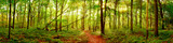Fototapeta Las - Forest panorama in autumn with bright sun