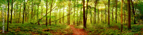 Foto op Canvas Bos Forest panorama in autumn with bright sun