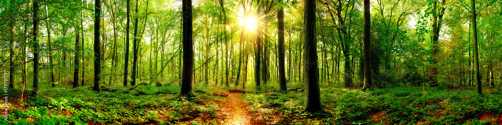 Fototapeta Forest panorama in with bright sun