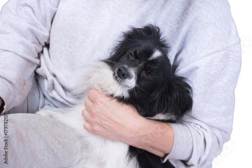 Kleiner Schwarz Weißer Hund Im Arm Einer Frau Buy This Stock