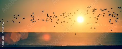 Panorama ocean beach at sunset with silhouettes of seagulls. Canvas Print