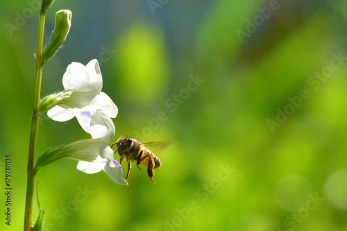 a Bee flying to the beautiful flower Poster