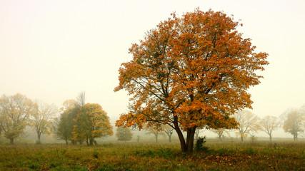 jesień na Warmii
