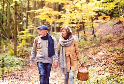 Obraz na plátně  Senior couple on a walk in autumn forest.