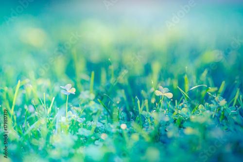 Fototapeta Nature background concept. Beautiful summer nature meadow background. Flowering green meadow on spring sunset light. Bright summer spring nature banner design. Inspirational nature closeup meadow. obraz na płótnie