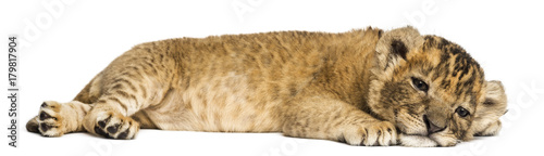 Fotografie, Obraz  Lion cub lying down, looking exhausted, 4 weeks old, isolated on white