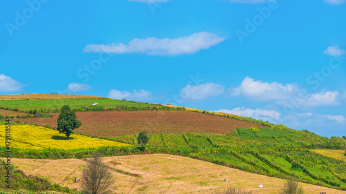Tuinposter Blauw The landscape scenery of the hilly agriculture crop field around countryside area of Pindaya, Shan state, Myanmar