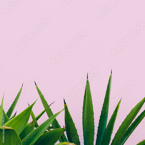 Photo  Plant o pink. Outdoors. Minimal design. Fashion for prints
