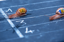 Snails Race Currency Metaphor ...