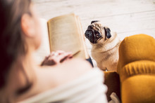 Adoreble Small Reader Dog. Woman Reading The Book And Her Funny Pug Dog Looking Pitifully