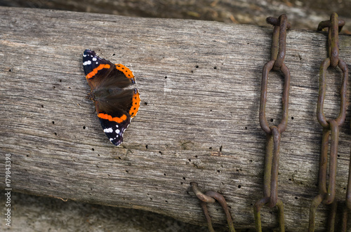 Foto op Aluminium Vlinders in Grunge Butterfly on the wooden board during sunny day, Vanessa atalanta