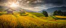 Rice Fields On Terraced With W...