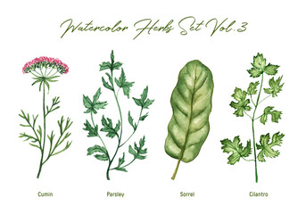 Plakat Watercolor herbs set volume 3. Illustration in high resolution.