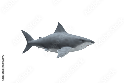 Photo Requin Blanc de profil