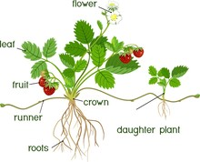 Parts Of Plant. Morphology Of ...