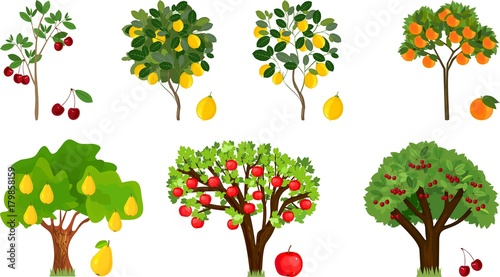 Fototapeta Set of different fruit trees with ripe fruits on white background