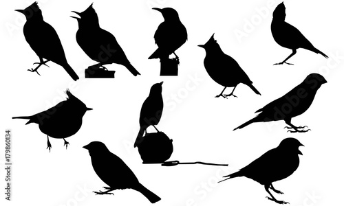 Lark Silhouette Vector Graphics Canvas-taulu