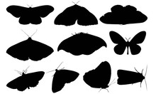 Moth Silhouette Vector Graphics