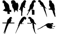 Parrot Silhouette Vector Graph...